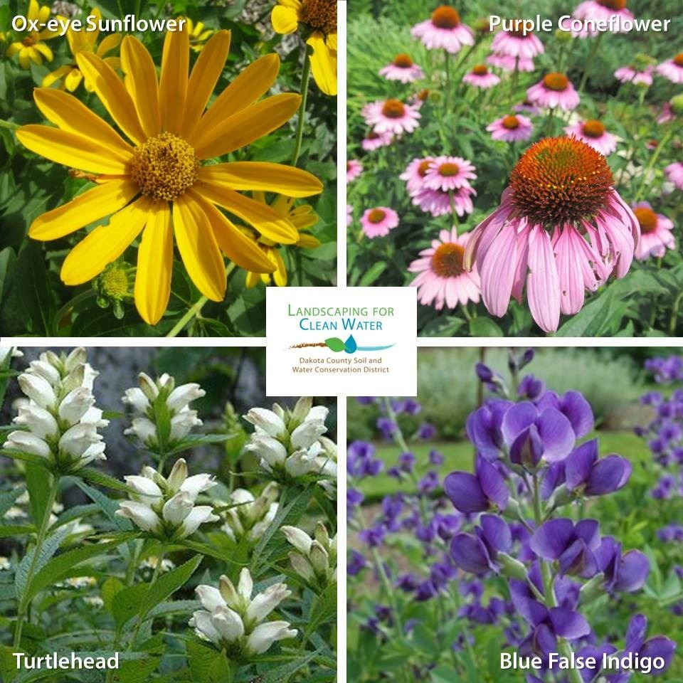 Examples of Native Plants by SWCD Landscaping for Clean Water